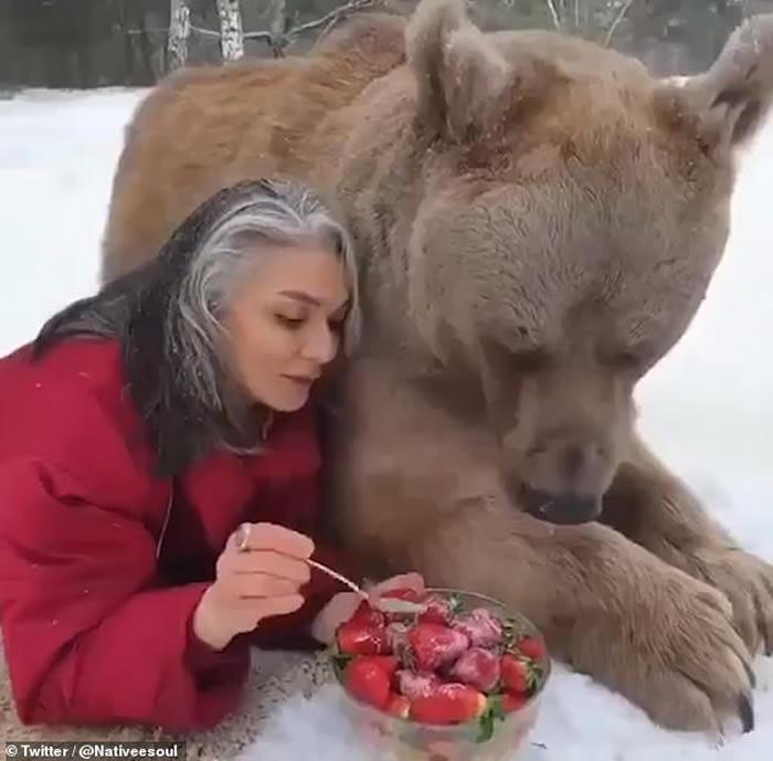 美国女子与大灰熊亲密躺在雪地上 喂食士多啤梨