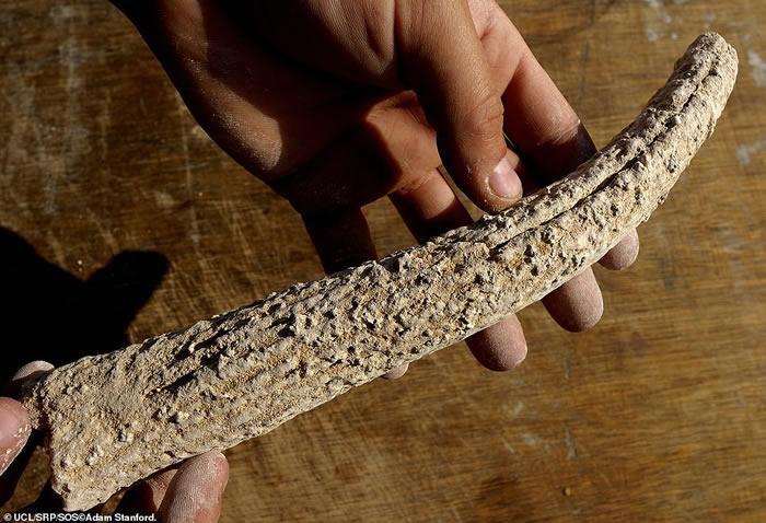 巨石阵很可能是英国最早的派对中心 各地的史前人类带着猪前来聚会