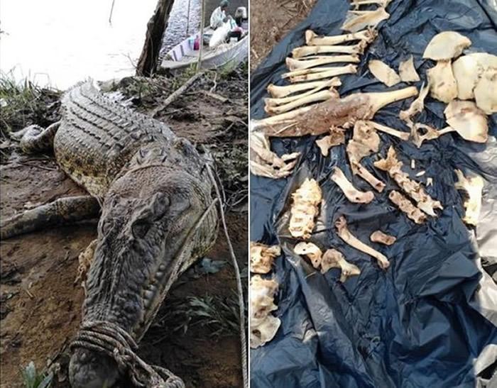 马来西亚4公尺巨鳄生吞工人 活捉剖肚惊见一堆人骨