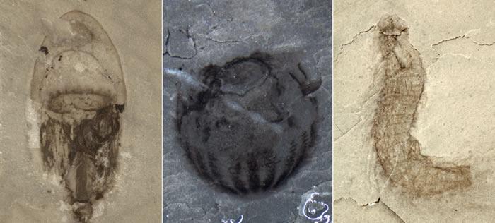 揭示寒武纪秘密的新宝藏发现了——清江生物群
