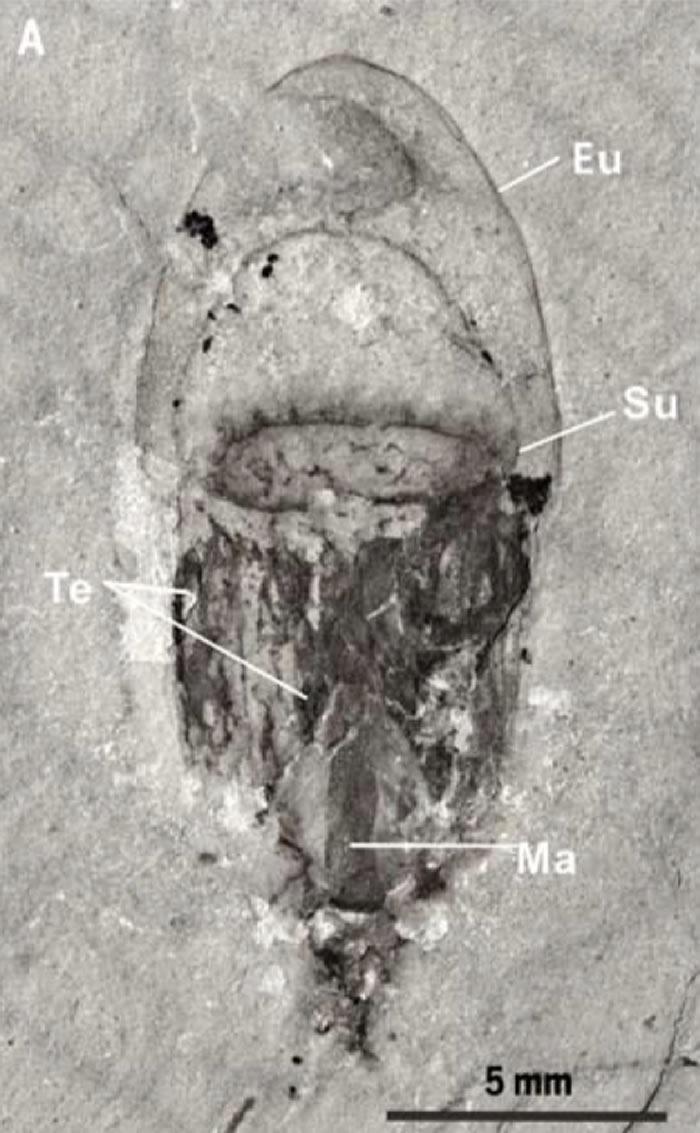 """专题:中国宜昌长阳地区发现5.18亿年前寒武纪特异埋藏化石库""""清江生物群"""""""