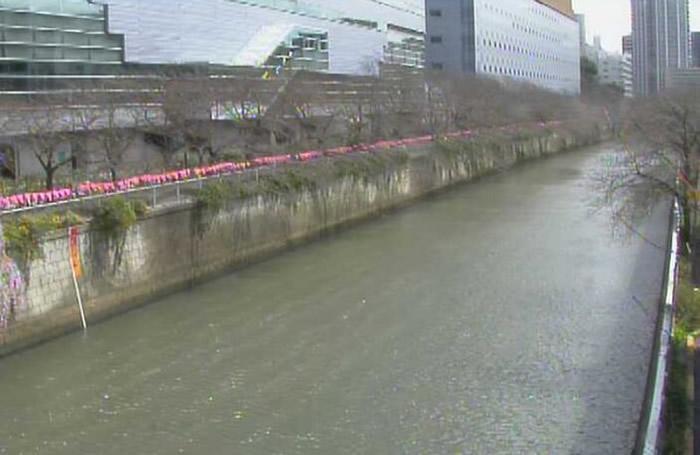 有网民上传图片,表示东京目黑川两旁的樱树也快将开花。