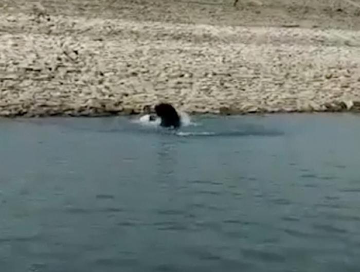 印度护林员在与熊的搏斗中遭受重伤