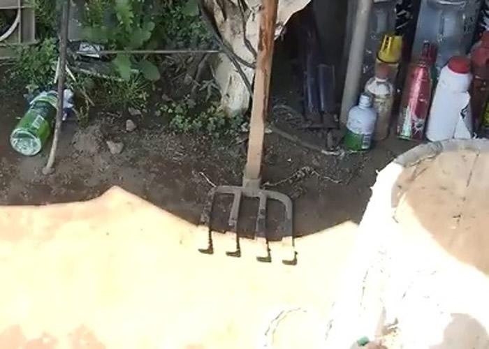 日本神奈川县小田原市92岁老大爷遭80公斤重山猪袭击 反击把柺杖都打断