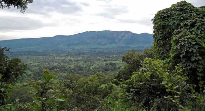 两个英国年轻人在马来西亚丛林里进行三周不穿衣服不吃食物的实验