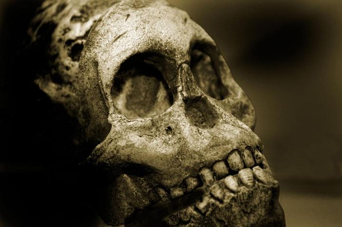 在各种人类物种历史的大部分时间里,咀嚼食物造成的牙齿磨损导致齿列与颚骨沿着齿缘对齐,例如照片中这颗尼安德特人(Neanderthal)男性的颅骨。 PHOTOG