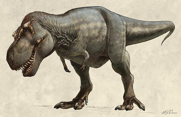 这只1991年出土的霸王龙(Tyrannosaurus rex)标本又名「史寇提」(Scotty),牠在世时可能重达8,800公斤,是已知最大的霸王龙。 ILL