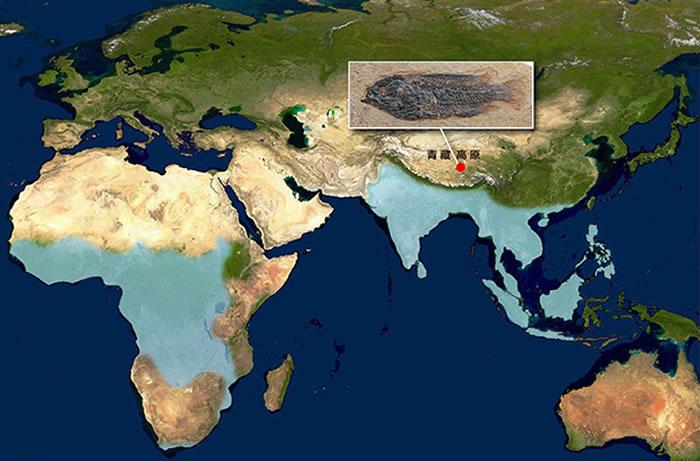 现代攀鲈分布区(蓝色)及青藏高原攀鲈化石产地(红圆)。化石为西藏始攀鲈正模标本,现存于中科院古脊椎动物与古人类研究所(吴飞翔供图)