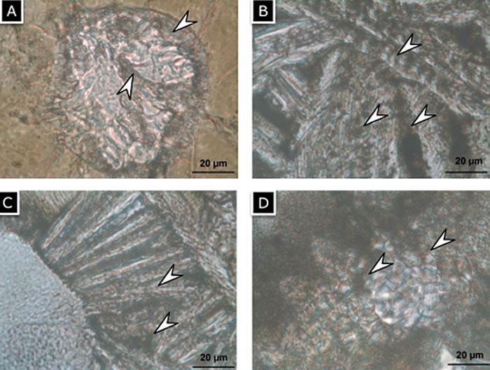 匈牙利研究团队称在火星陨石ALH-77005上发现生物信号