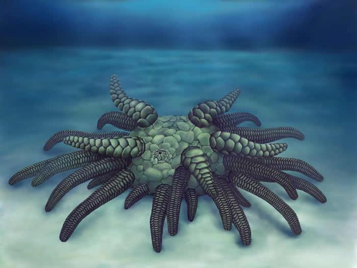 """英国赫里福德郡发现4.3亿年前的""""克苏鲁海参""""(Sollasina Cthulhu)化石"""