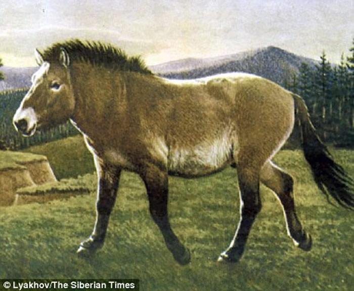 """在俄罗斯发现的4.2万年前灭绝动物""""勒那马""""(Equus lenensis)将复活"""