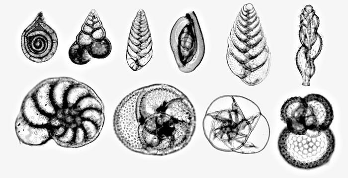 地球物种大规模灭绝后 生物进化限制了物种多样性的恢复速度