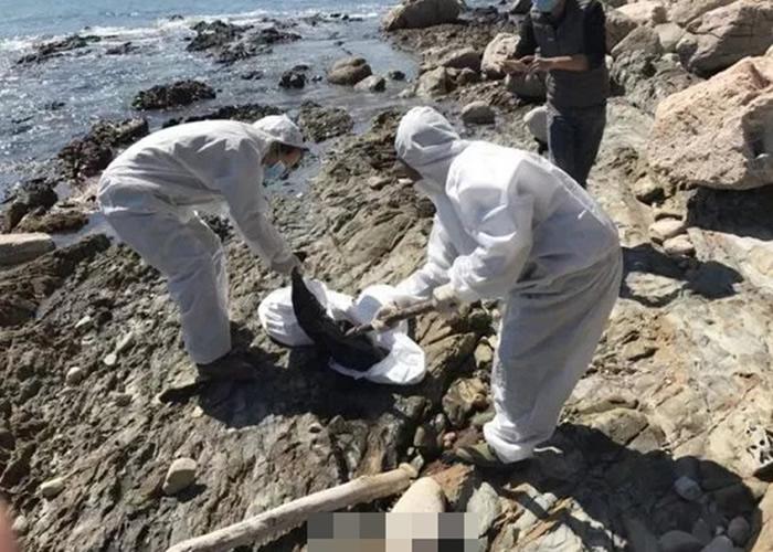深圳市去年也发生过江豚死亡的事件。