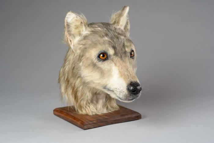 苏格兰利用面部修复技术展示近五千年前狗的模样