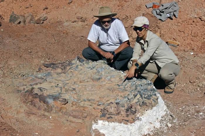 """阿根廷2.2亿年前""""恐龙坟场""""挖出10种不同类型恐龙化石"""
