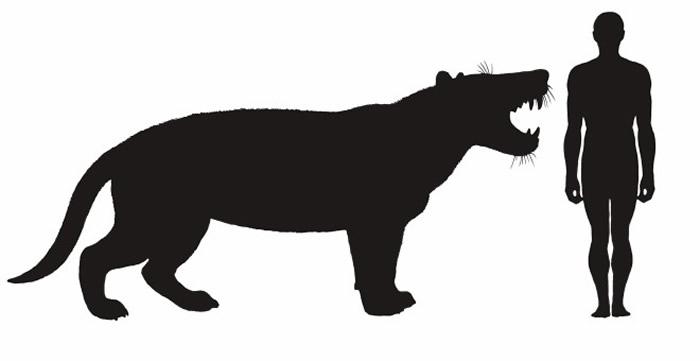 """2300万年前""""来自非洲的大狮子""""Simbakubwa kutokaafrika有着""""香蕉大小的犬齿"""""""