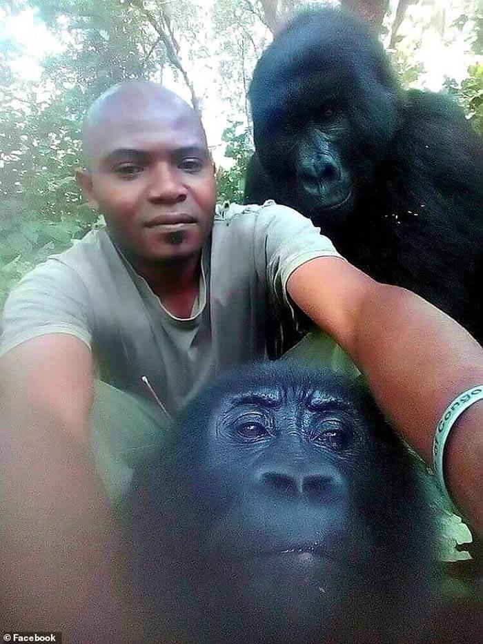 """""""反盗猎菁英单位及战斗追踪者"""":刚果民主共和国维龙加国家公园两只黑猩猩和巡守员开心自拍"""