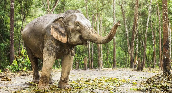 一头大象袭击印度奥里萨邦两个村庄造成5人死亡