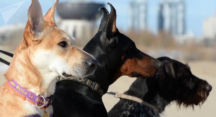 利物浦大学研究发现养狗的人的身体通常比养猫和其他宠物的人要健康得多