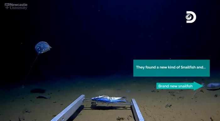 美国潜水团队在印度洋7192公尺深爪哇海沟拍摄到透明凝胶状新物种水母
