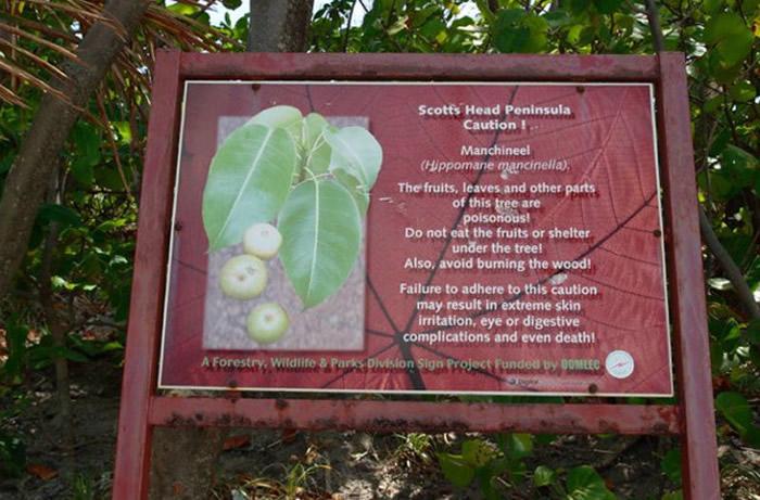 毒番石榴树附近各处挂着告示牌。