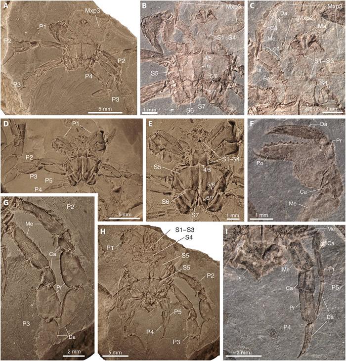 《科学进步》杂志:耶鲁大学古生物学家描述以前未知的9000万年前螃蟹