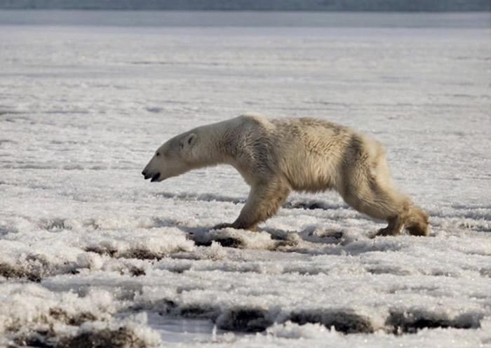 联合国报告:全球有多达100万种生物因人类的影响而面临灭绝
