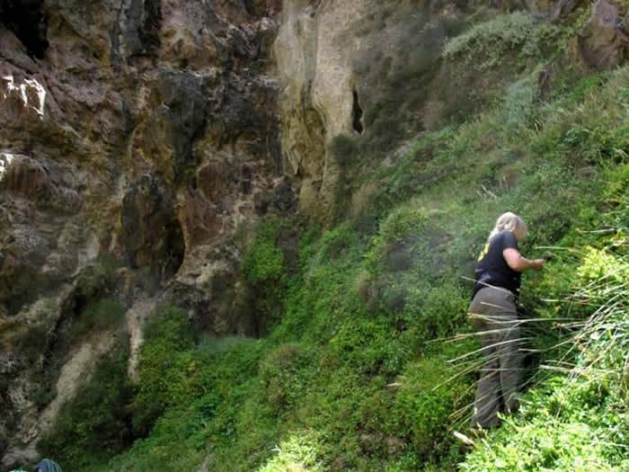 《人类进化杂志》:南非克拉西斯河洞穴发现现代人在12万年前就已食用植物淀粉