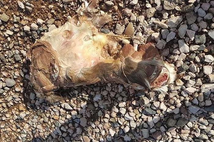 英国德文郡男子在海滩上发现神秘动物遗骸