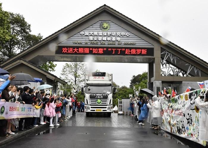 运载大熊猫的专车从雅安碧峰峡基地出发到机场。