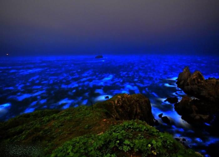有学者证实,蓝眼泪的发光来源为夜光虫。