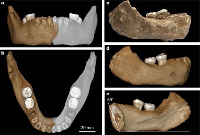 夏河人下颌骨化石照片及三维重建的模型照片(灰色为虚拟重建的镜像部分)