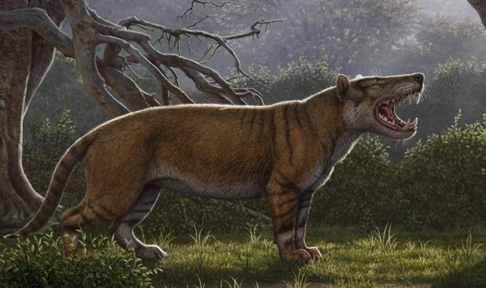 巨狮鬣兽(Simbakubwa kutokaafrika)是一种巨大的肉食动物,属于已灭绝的鬣齿兽(hyaenodont)类群,目前对牠的了解来自肯亚发现的大部