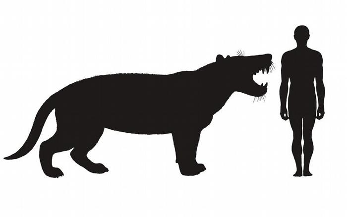 插图画出现代人和巨狮鬣兽的体型比较。 ILLUSTRATION BY MAURICIO ANTON