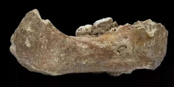夏河丹尼索瓦人的下颌骨(来源:张东菊供图)