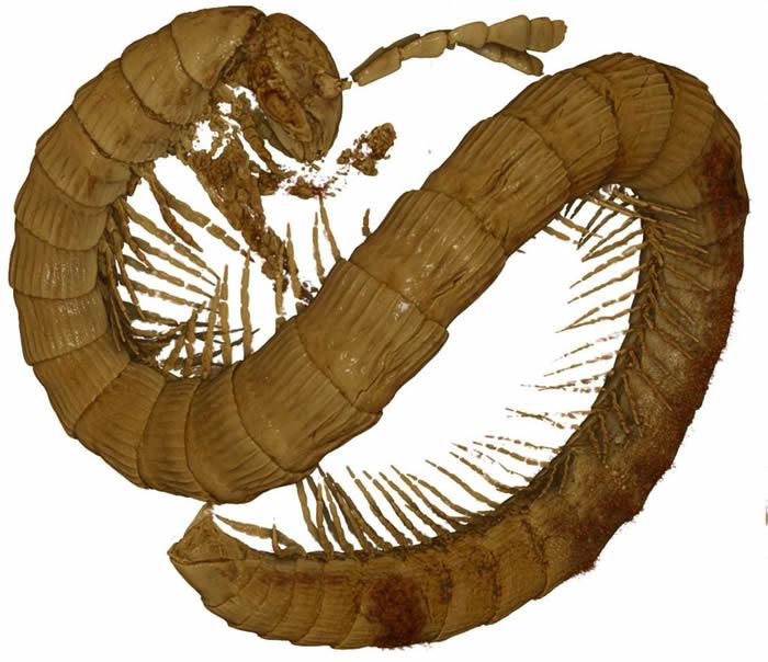 《ZooKeys》杂志:缅甸琥珀中发现9900万年前白垩纪时期蜈蚣