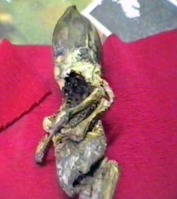 """外星人尸体?1996年俄罗斯老奶奶发现的""""侏儒小矮人""""被证实是核灾难畸形人类婴儿"""