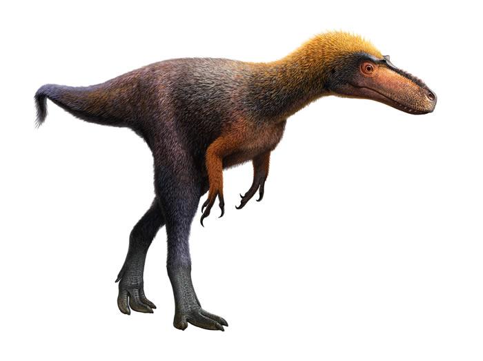 美国新墨西哥州1米高暴龙近亲化石出土 命名为Suskityrannus hazelae