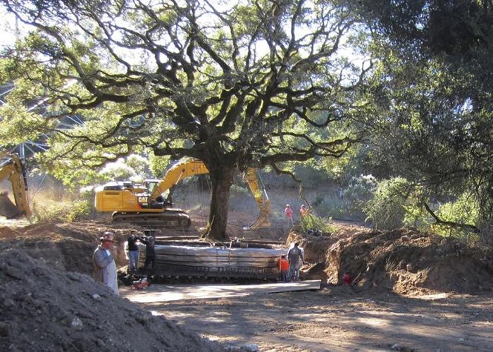美国三藩市一对夫妇砍伐180年历史橡树 遭罚款60万美元