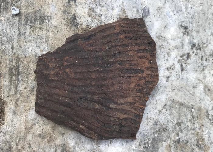与十三行遗址出土相似的粗绳纹陶。