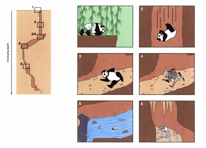 江东山大熊猫死亡与分解过程示意图(引自《Historical Biology》杂志)