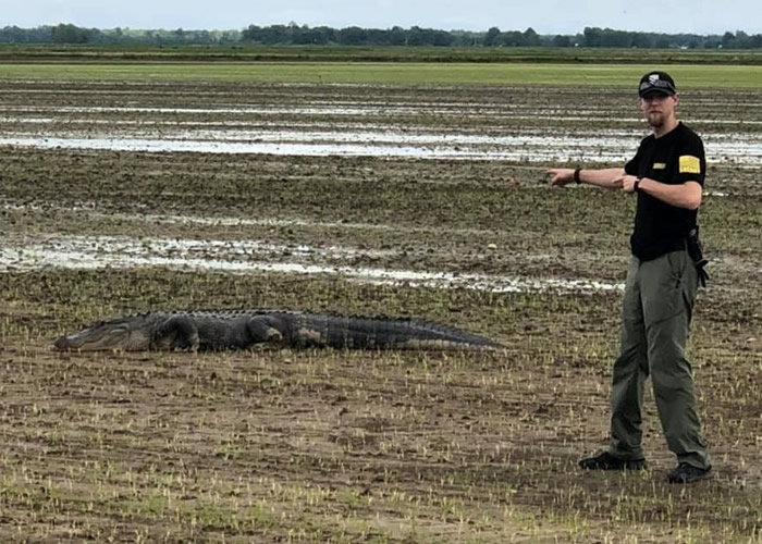 美国阿肯色州格拉布斯暴雨致河水泛滥 巨鳄冲上岸吓煞民众