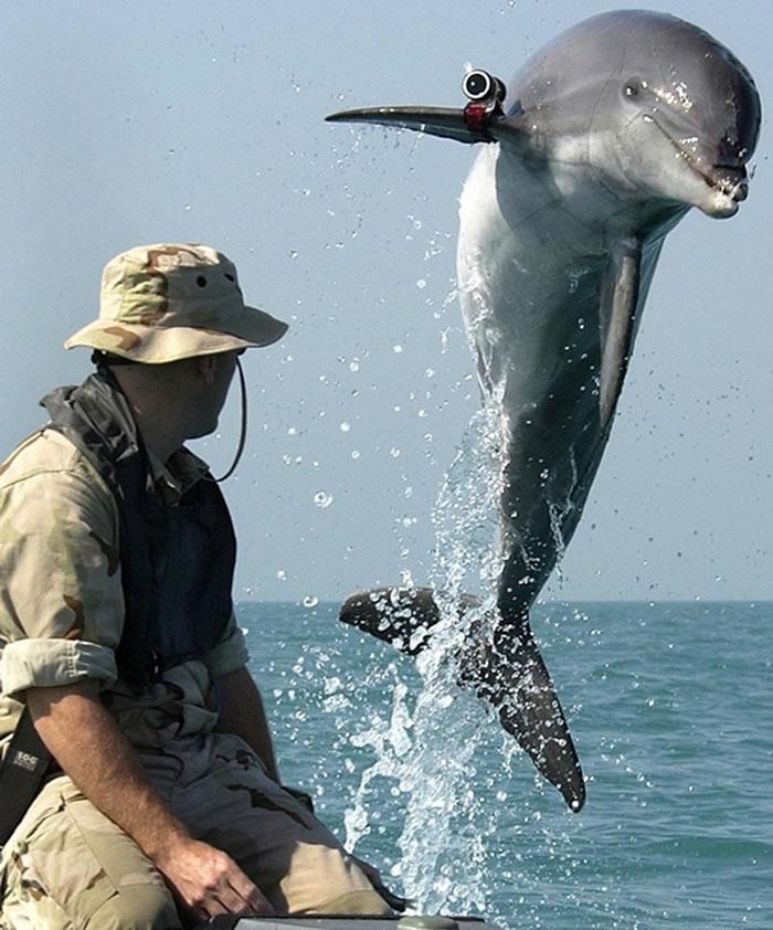 在美国海军于波斯湾的一场训练活动期间,一只名叫「阿K」(K-Dog)的瓶鼻海豚跳出水面。 PHOTOGRAPH BY PETTY OFFICER FIRST C