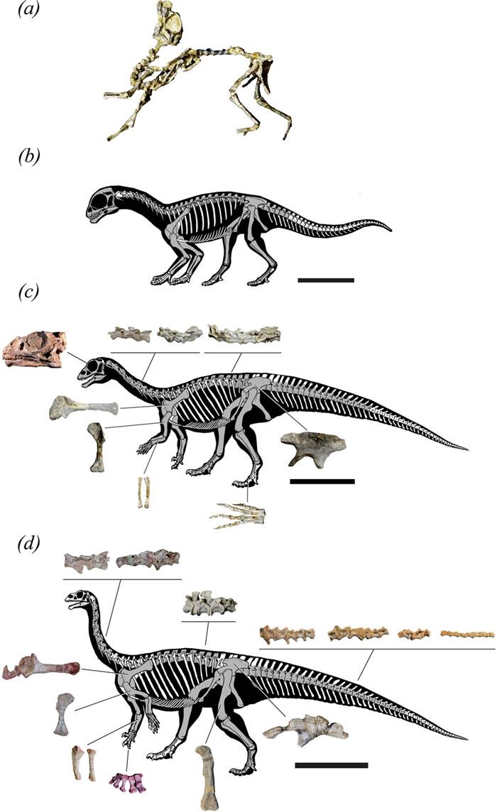 阿根廷发现的巴塔哥尼亚鼠龙幼年时用四肢行走 长大后用两条腿走路