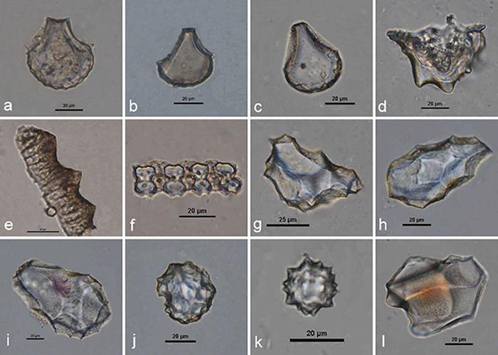 茶岭遗址常见植硅体类型(a-f:水稻植硅体)