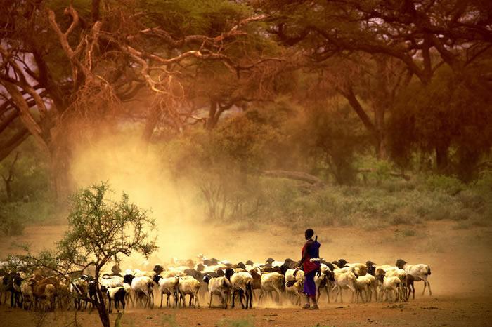 放牧和耕作是分阶段传入非洲东部并影响人群的(Credit: © kubikactive/Adobe Stock)