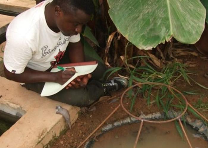 研究人员在当地培殖疟蚊。