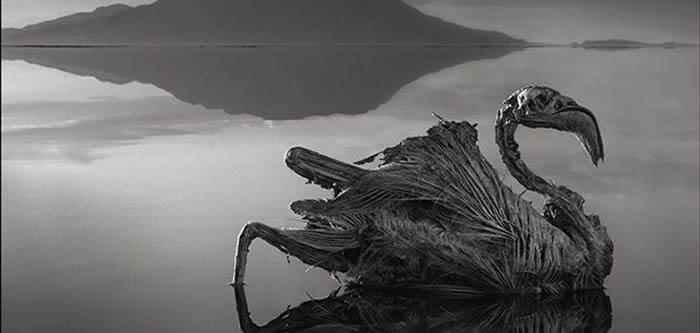 """坦桑尼亚火红""""纳特龙湖""""(Lake Natron)绝美却致命 生物一碰湖水会变干尸"""