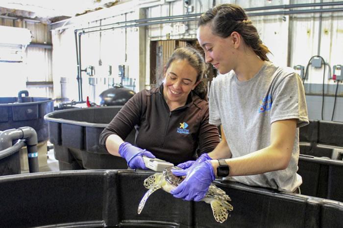 大约有100只濒临灭绝的海龟在美国德克萨斯州被大风暴冲上海岸