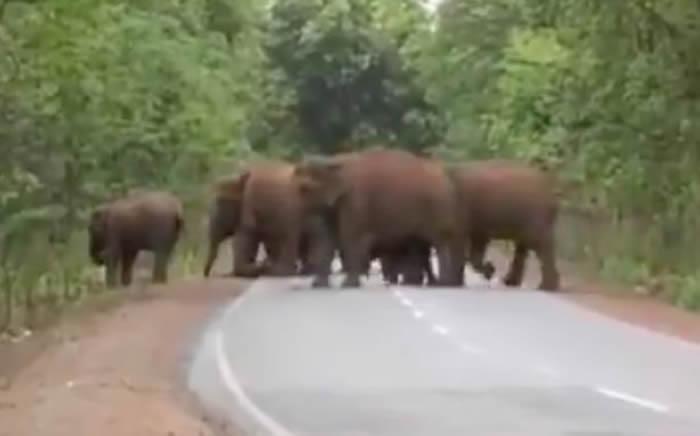 印度大象群为小象举行葬礼